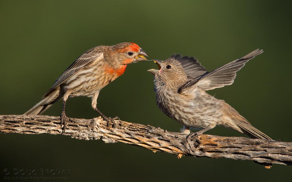 Baby Bird Season Hawks Aloft Inc