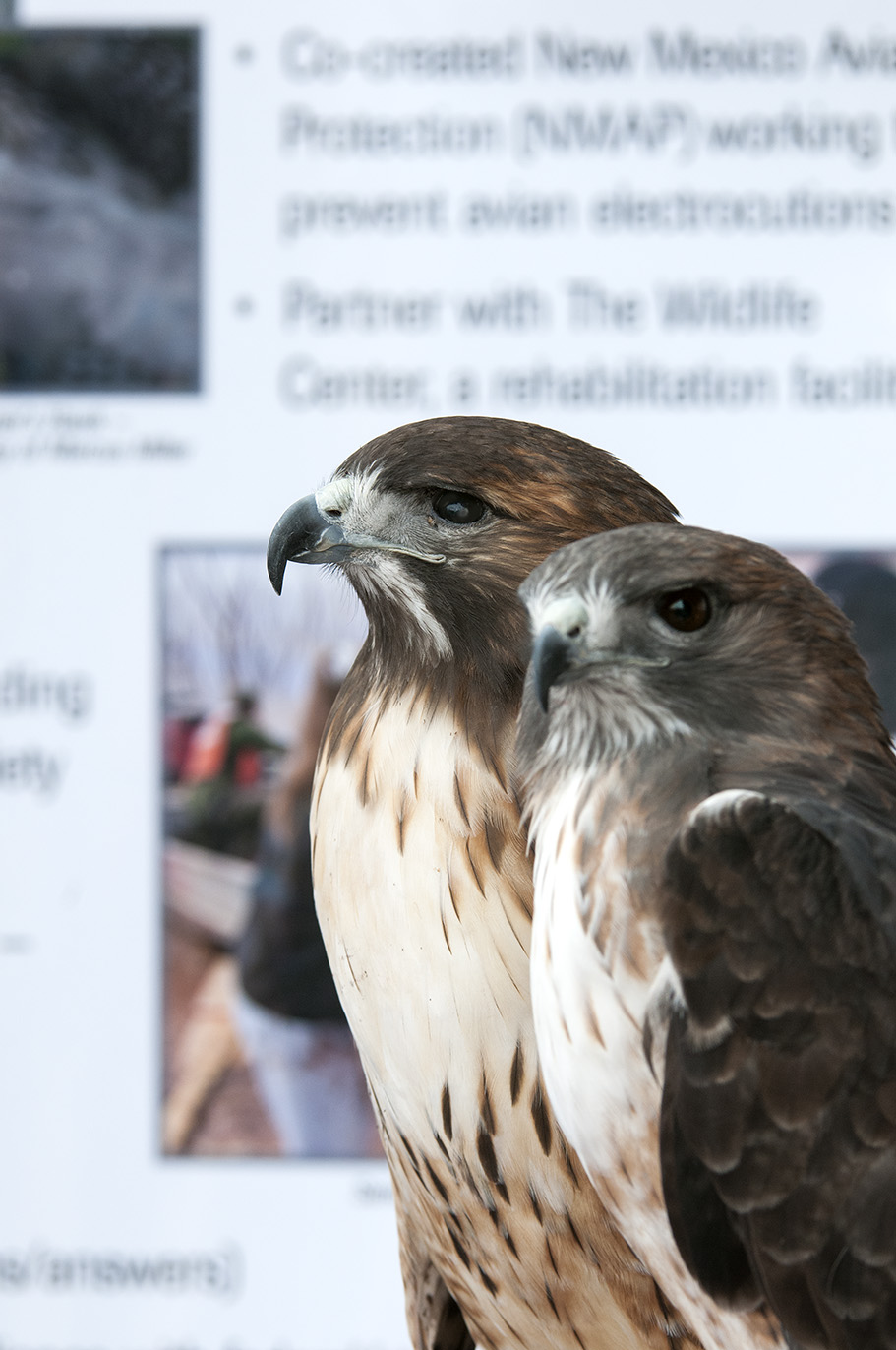 Adopt A Raptor Hawks Aloft Inc