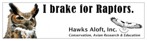 Great-horned Owl bumper sticker