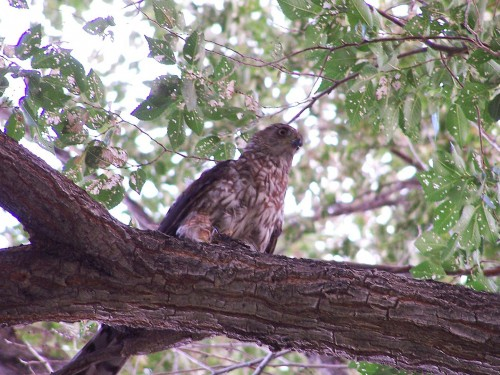 NMMT nest visitor
