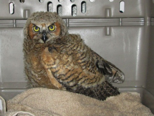 Owl1-edited