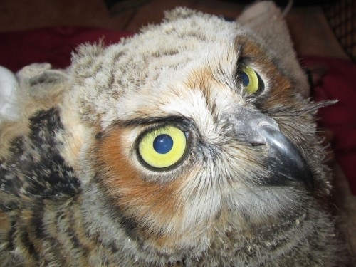Owl2-edited