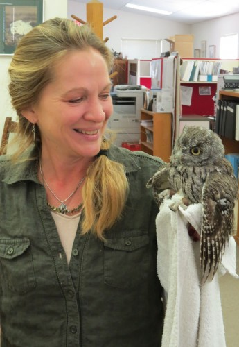 Lisa Morgan, the Wildlife Rescue Coordinator, and a western-screech owl