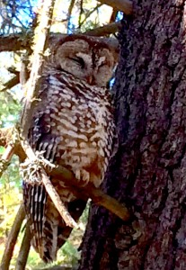 Membership benefits include events such as birding (and owling) hikes!