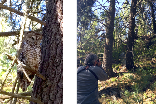 Mike taking pictures of the first owl, the father of a nestling or two who hadn't yet fledged (left the nest). Still, though, he looks pretty happy, so I'm guessing everything is going well with his kids!
