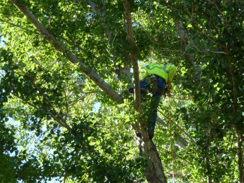 Trees, Inc. staff installing the wicker basket nest.  Image by PNM Resources.