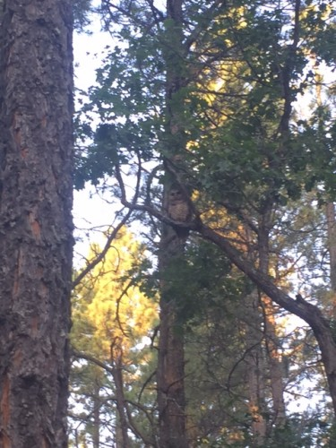 Can you spot the wildlife? Taken in the Coconino National Forest in Flagstaff, Arizona by Amanda Schluter