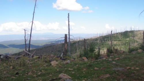 Picture of the scar from the Little Bear fire from the Gila National Forest that occurred in 2012, Picture was taken in 2014 by Amanda Schulter