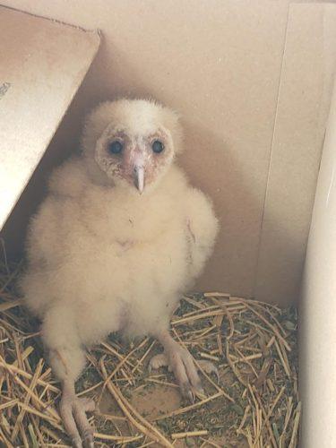If You Find A Baby Bird Hawks Aloft Inc